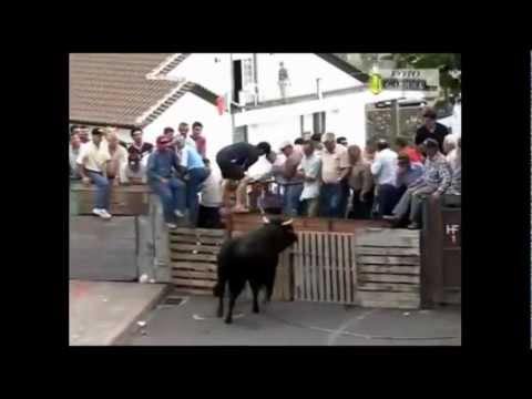 Xxx Mp4 Bulls Demolishing People 3gp Sex