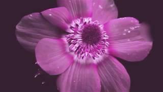 রাসুল আমার ভালোবাসা -Rasul Amar Valobasa...Bangla Islamic Song...