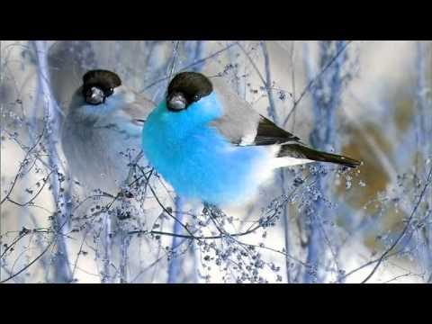 Xxx Mp4 3 Hour Bird Sounds Relaxation Nature Sounds Music For Meditation Birds Chirping Birds Singing 3gp Sex