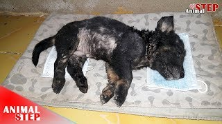 Puppy from Deformed Back Legs to Beautiful Life after 8 Months – Happy Ending!