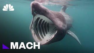 The Meg': Is The Terrifying Prehistoric Shark From Jason Statham's New Movie Real? | Mach | NBC News