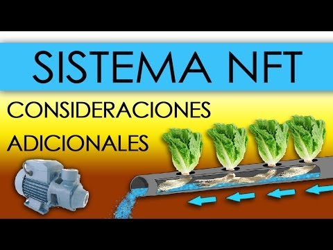 HIDROPONÍA SISTEMA NFT EN LECHUGAS Nutrient Film Technique
