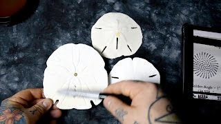 AWESOME!! FIRST TIME SEEN: Missing Secret of Sand Dollar & Golden Angle hidden in Nature