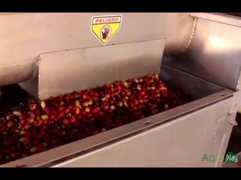 Cómo es el Proceso Beneficio de Café en Santa Rosa Colombia TvAgro por Juan Gonzalo Angel