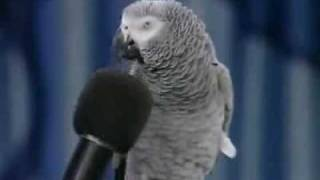 The 2nd Smartest bird in the world