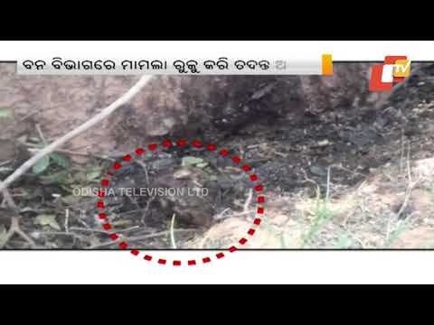 Xxx Mp4 Animal Carcass Found In Debrigarh Forest Is Of Leopard Clarifies Minister 3gp Sex