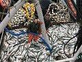 Amazing World Big Catch Trawler Fishing Boat Lot Of Live Fish Catching At Sea