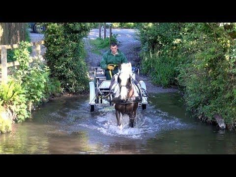 Xxx Mp4 Breaking A 12yo Riding Horse To Harness Bertie The Piebald Cob 3gp Sex