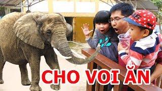 Cho Con Voi Ăn Bỏng Ngô và Con Khỉ Ăn Bắp Rang Bơ ♥ Bé Bún – Bé Bắp ♥