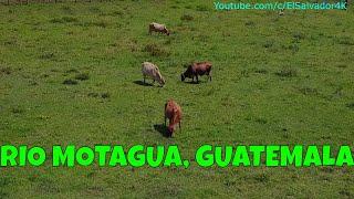 Hermosos paisajes naturales del rio Motagua y las vacas 😍. Nos fuimos pa' Guate(1er dia). Parte 5