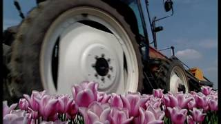 Tulpenselectie en tulpenkoppen