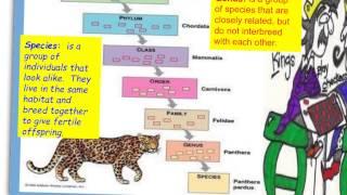 IGCSE Biology Chap 1-2 Classification