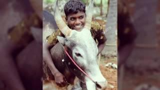 Jallikattu special Beep show- copycat version a vijay ajith fan