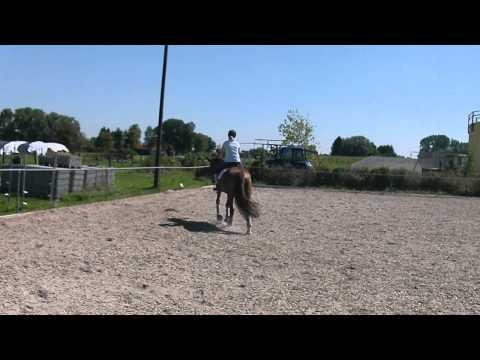 Bolero Training Dressurpferde A DA3