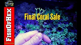 Blowout Coral Frag Sale | Final Sale For The Year