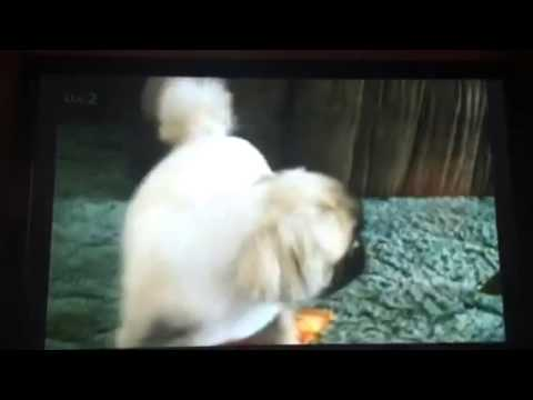 Lol funny dog video (3min)