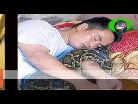 9 Tahun Lalu, Ia Menyelamatkan Ular Python Kecil yang Sekarat, Sang Python pun Membalas Budi