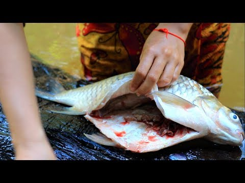 Xxx Mp4 Cooking Big Fish On River Eating Delicious In Forest 3gp Sex