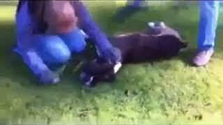 کلیپ های جالب و خنده دار ایرانی Funny Iranian Clips  نجات یک سگ با ماساژ قلبی !!!