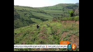 Iran Khaseh-Kul village, Rudbar county, People & Herbal plants گياهان دارويي روستاي خاصه كول رودبار