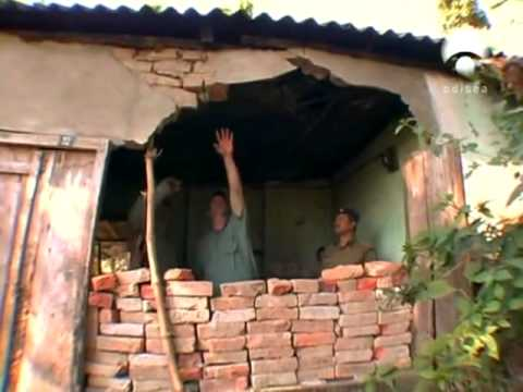 La furia de los elefantes Documentales Online en Español Tu canal gratuito de Documentales