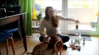 Hund Tutorial - Fellpflege - Die schnuckeligen Drei