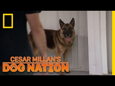 Xxx Mp4 Approaching An Apprehensive Dog Cesar Millan S Dog Nation 3gp Sex