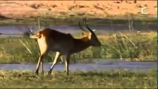 Documentaire animalier   Les predateurs de la savane