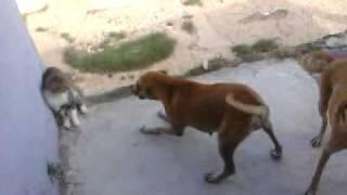 pelea de gatos y perros