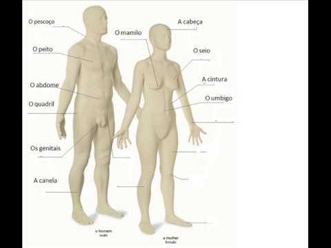 O corpo humano em Português