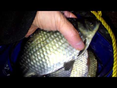 видео ночная рыбалка на карася