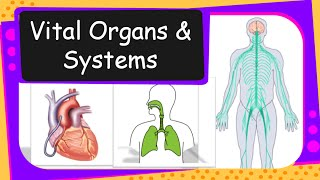 Science - Human Vital Organs and Systems Overview - English