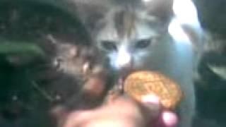 Cat & Biscute