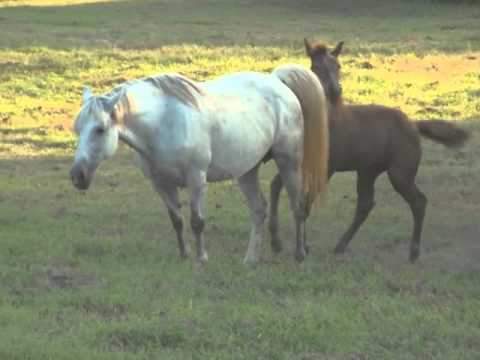 Three Month Old Foal, Danny, Meets the Rest of the Herd