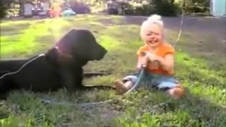 N°16 Le chien elle nous montre ce qu