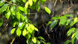 Morning Relaxing Music - Peaceful Music, Calm Music for Stress Relief, Yoga, Study (Paris)