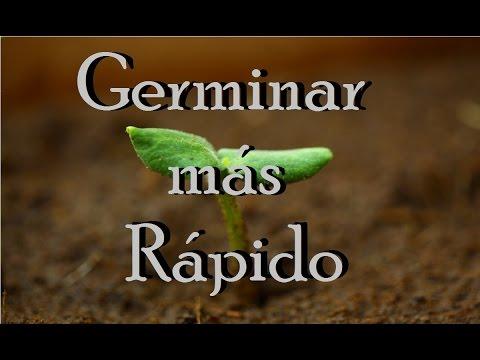 Como germinar una semilla más rápido. Huerto Urbano Villarreal