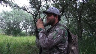Searching For A Blackbuck Part 1