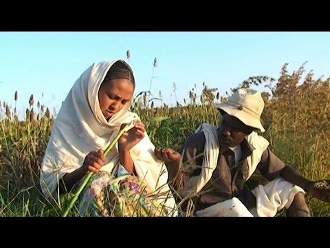 Eritrea Beraki Gebremedhin Qedawitey ቀዳዊተይ New Eritrean Music 2015
