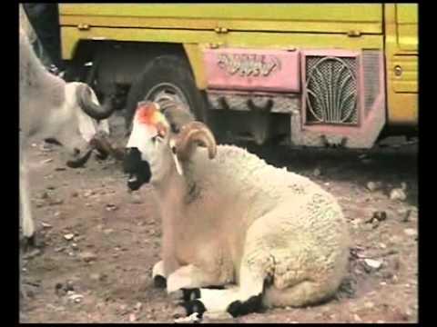 Aid al adha .Casablanca El hank PART 1 Feast of Sacrifice Fiesta del Sacrificio