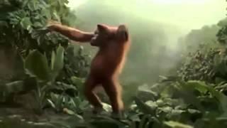 Video Engraçado   Macaco Muito Louco Hoje é Sexta Feira uhuul Morra de rir !   10Youtube com