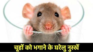 चूहा भगाने के उपाय | चूहों को भगाने के घरेलु नुस्खें | Get Rid of Mice Quickly