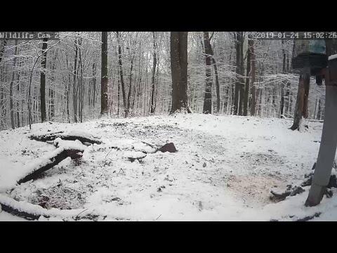 Xxx Mp4 Live Deer Wildlife Webcam 2 3gp Sex