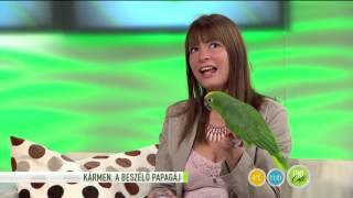 Cuki beszélő papagáj a FEM3 Caféban-2015.11.09.-tv2.hu/fem3cafe
