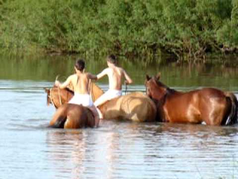 Cavalo Crioulo Banho refrescante Rio Negro Aceguá RS