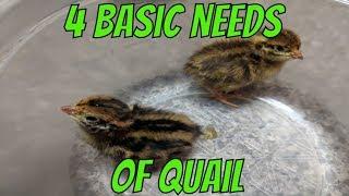 Basic Needs of Quail