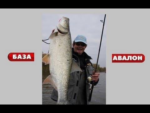 рыбалка в авалоне отчет