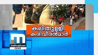 Ignoring Stop Memo, Contest To Find Tallest Elephant Held| Mathrubhumi News