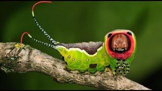 تعرف على 10 حشرات خطيرة جداً على حياة الإنسان يجب عليك الإبتعاد عنها !