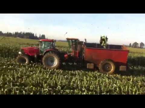 Byron corn picker